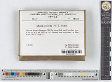 Mycena rosella (Fr.) P. Kumm.