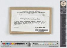 Melanogaster broomeianus Berk.
