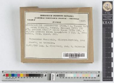 Leucoagaricus leucothites (Vitt.) S. Vasser 1977 sensu Michael, Henning, Kreisel 1977