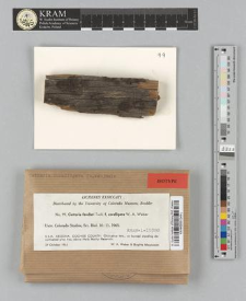 Cetraria fendleri fo. coralligera W.A. Weber