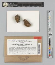 Caloplaca stantonii W.A. Weber ex Arup