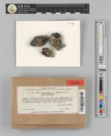 Buellia galapagona W.A. Weber