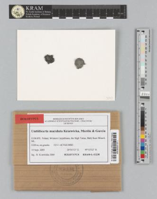 Umbilicaria maculata Krzewicka, Martín & García