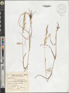Agrostis alba L. var. genuina (Schur) A. et Gr. subvar. flavida A. et Gr.