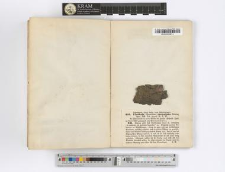 Ulothrix crenulata Kützing