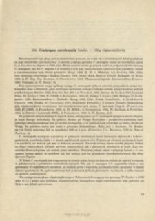104. Crataegus curvisepala Lindm. - Głóg odgiętoszyjkowy