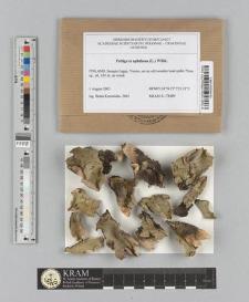 Peltigera aphthosa (L.) Willd.