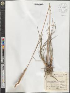 Koeleria glauca (Spreng.) DC.