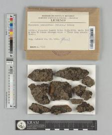 Physconia perisidiosa (Erichsen) Moberg