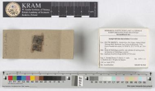 Lamproderma maculatum Kowalski