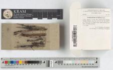 Lamproderma ovoideum Meyl.