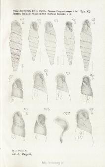 Prace Zoologiczne Polskiego Państwowego Muzeum Przyrodniczego. Tablica XV