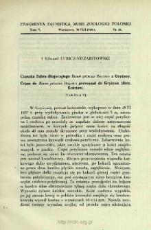 Czaszka Żubra długorogiego Bison priscus Bojanus z Gryżyny = Crâne de Bison priscus Bojanus provenant de Gryżyna (distr. Kościan)