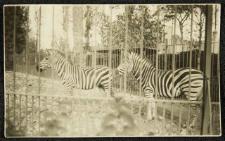 Zoo Kair