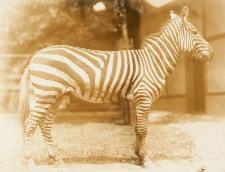 Zoo Washington