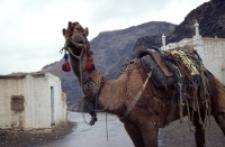 Uprząż wielbłądzia, Przełęcz Chajberska (Dokument ikonograficzny)