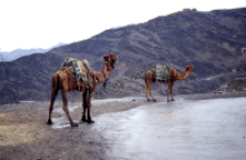 Harness of camel, Khyber Pass (Iconographic document)