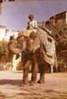 Słoń na zamku Amer w Jaipur (Dokument ikonograficzny)