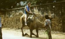 Dromedary camel, Rajasthan (Iconographic document)