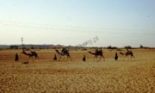 Obóz pasterzy dheberiya rabari (Dokument ikonograficzny)