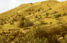 Stado kóz (Dokument ikonograficzny)