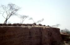 Cmentarz muzułmański z Radżastanu (Dokument ikonograficzny)