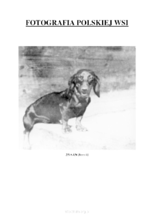 [A dachshund] [An iconographic document]