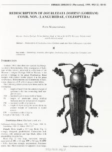 Redescription of Doubledaya dohrni (Gorham) comb. nov. (Languriidae: Coleoptera)