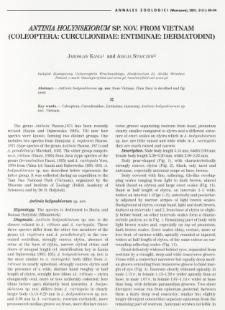 Notes on the genus Mestorus Schönherr, 1840 (Coleoptera: Curculionidae: Brachyderinae)