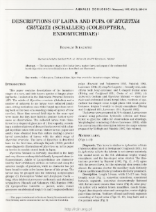 Descriptions of larva and pupa of Mycetina cruciata (Schaller) (Coleoptera, Endomychidae)