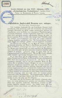 Coptolabrus Jankowskii Fusanus nov. subspec.