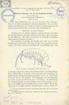 Gammarus sowinskyi n. sp. aus der Umgebung von Kiew