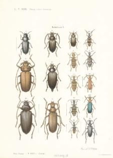 Owady krajowe kózkowate: Cerambycidae