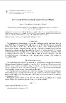 New records of Heteroceridae (Coleoptera) from Ethiopia
