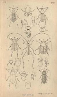Beitrag zur lnsectenfauna von Vandiemensland mit besonderer Berücksichtigung der geographischen Verbreitung der Insecten