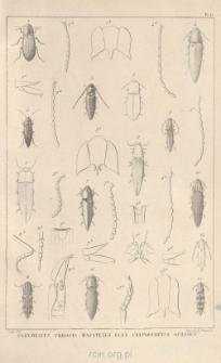 Monographie des Élatérides. T. 4