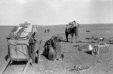 Likwidacja obozowiska, fragmentaryczne przekoczowanie, transport wielbłądzi w zaprzęgu i juczny