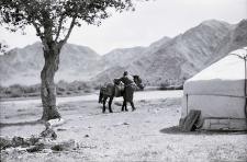 Dosiadanie konia