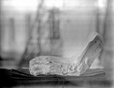 """Stanowisko Horodok II : szczątki drapieżnika opisane w publikacji """"Szczątki człowieka paleolitycznego"""". W: Ziemia ; 12 (1927) 4 s. 59-60"""