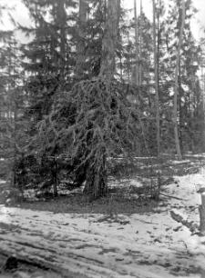 Zieniewicze, gm. mińska : widok na okolicę