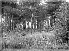 Góra Puławska : trasa szybików
