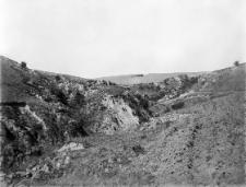 Zbrza Wielka koło Zawichostu : jar na Zbrzy Wielkiej pod Zawichostem