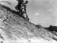 Wieś Tynne (Polesie) : zdjęcie zbocza pociętego płatu tarasy fluwioglacjalnej