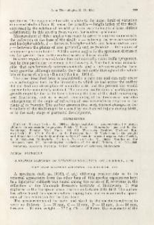A rufous specimen of Eptesicus serotinus (Schreber, 1774); Rudy okaz Eptesicus serotinus (Schreber, 1774)