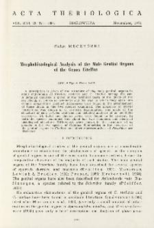 Morphohistological analysis of the male genital organs of the genus Citellus