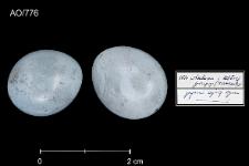 Saxicola rubetra